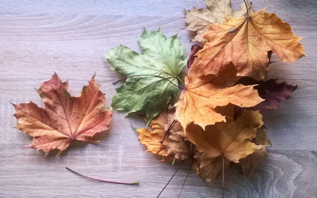 Jesienne prace z liści na każdy dzień tygodnia