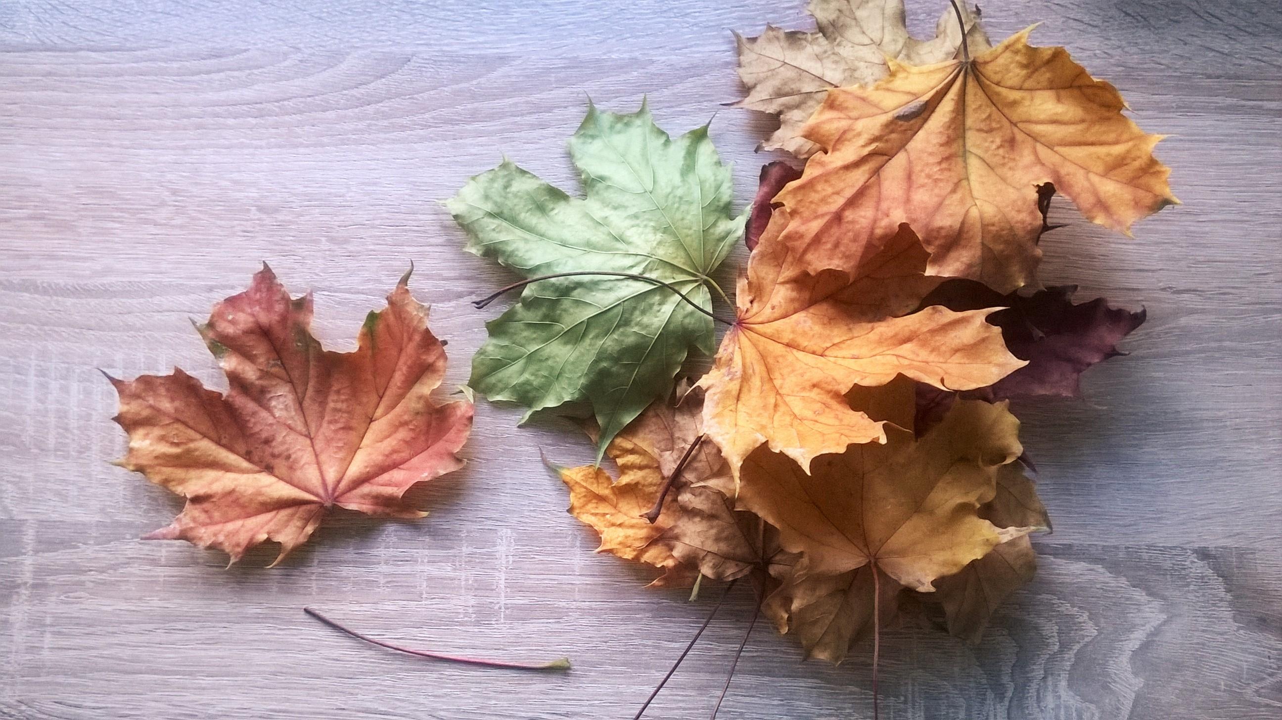 Jesienne prace z liści