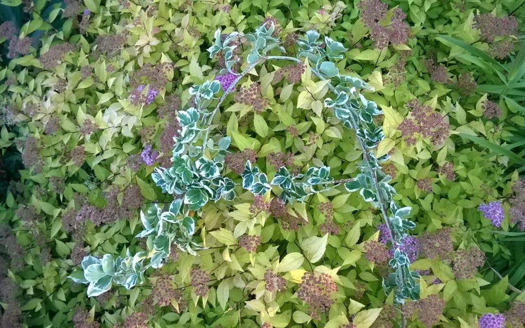 Przyrodnicze abecadło – zielnik fotograficzny