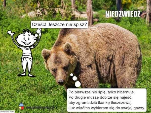 Zwierzęta zapadające wsen zimowy - niedźwiedź